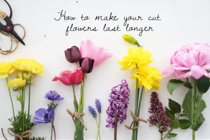 Tips And Tricks For Making Fresh-Cut Flowers Last Longer | Idea Digezt