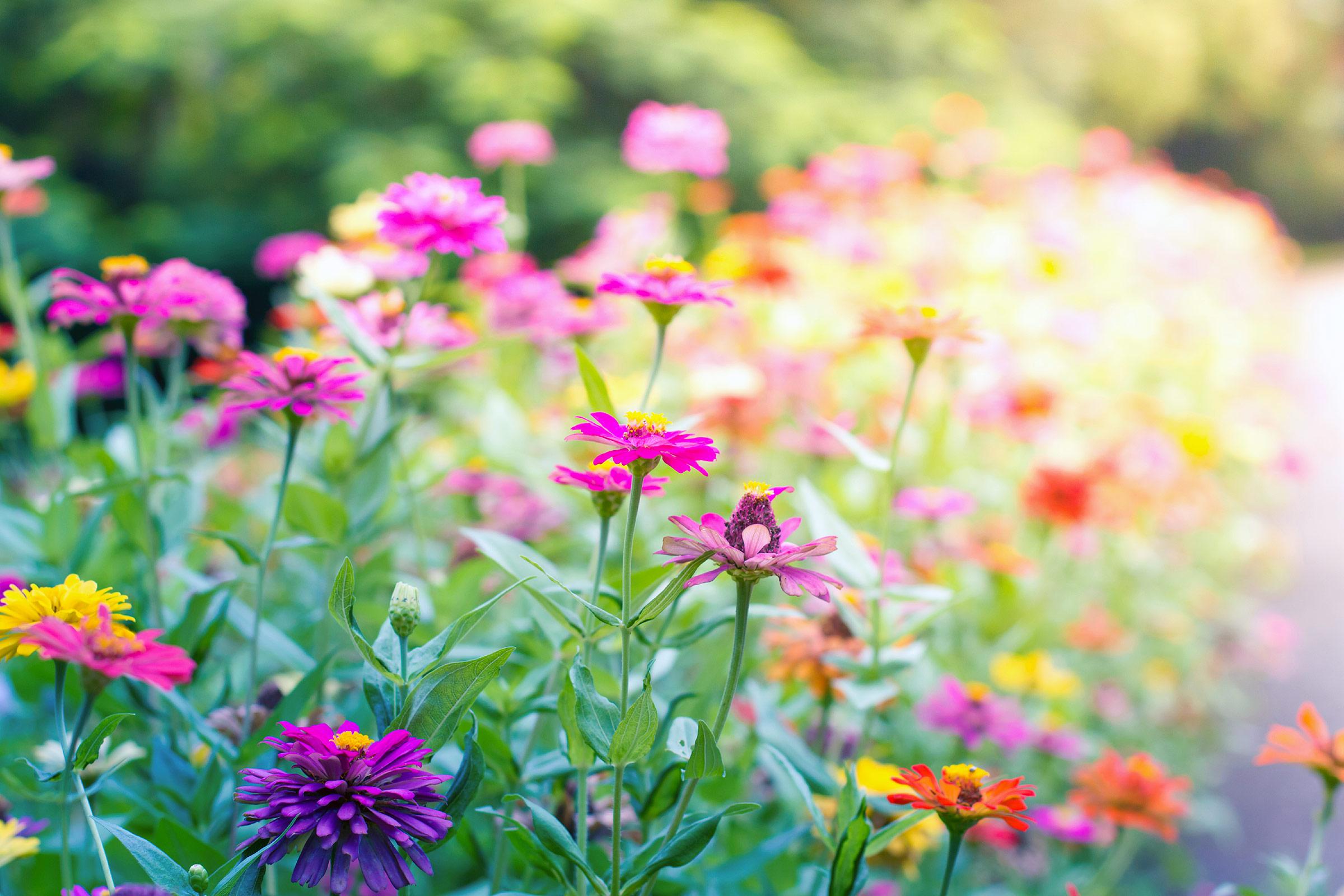 01,tips,butterfly,garden,vibrant,flowers
