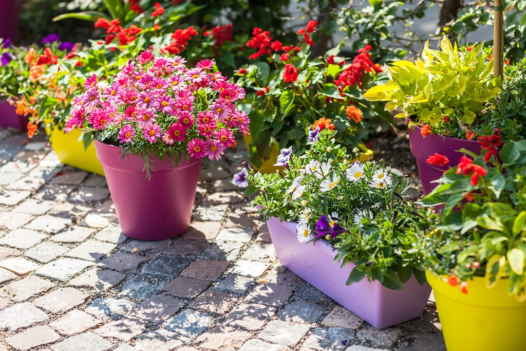 Container Gardening Tips for First Timers Idea Digezt